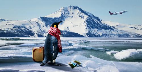 pinguinreise