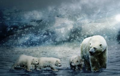 polarbaeren