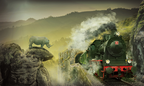 rhino watching a steam train