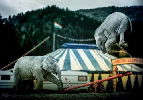 Fliegende Elefanten